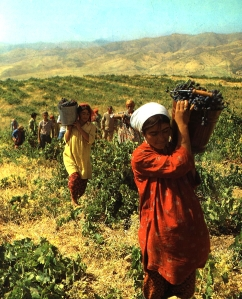 workers-in-vineyard